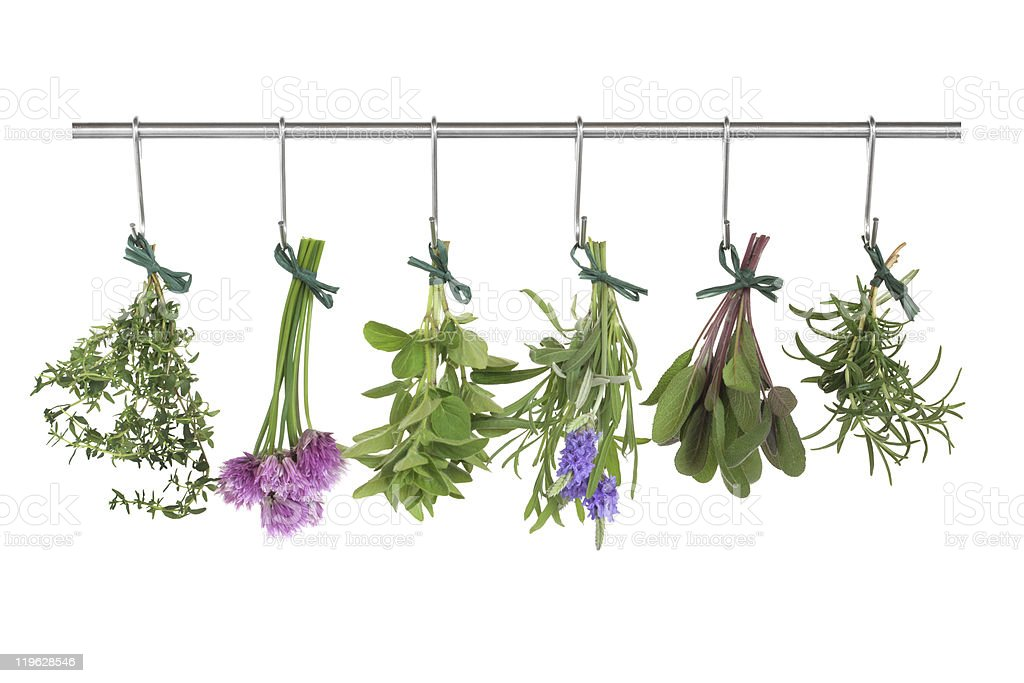 Herbs Hanging and Drying stock photo