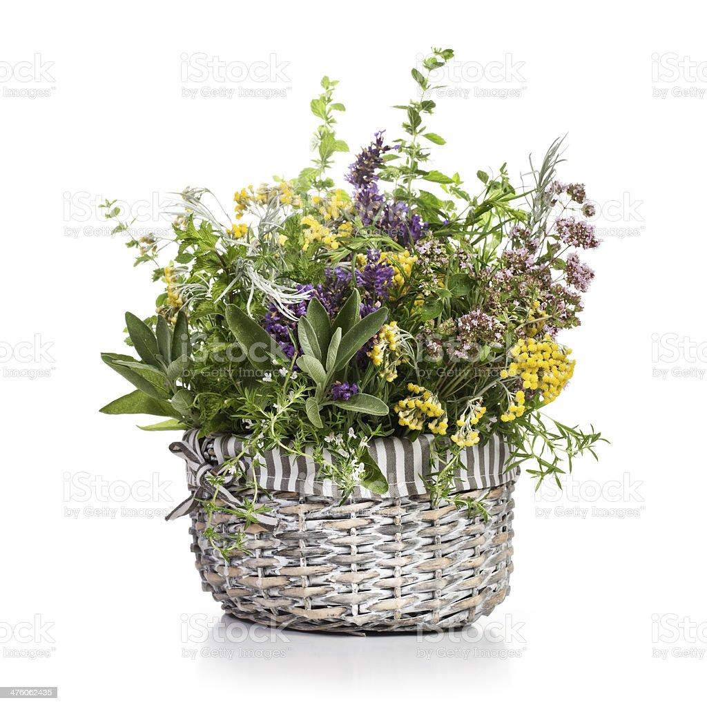 Herbs in Bloom stock photo