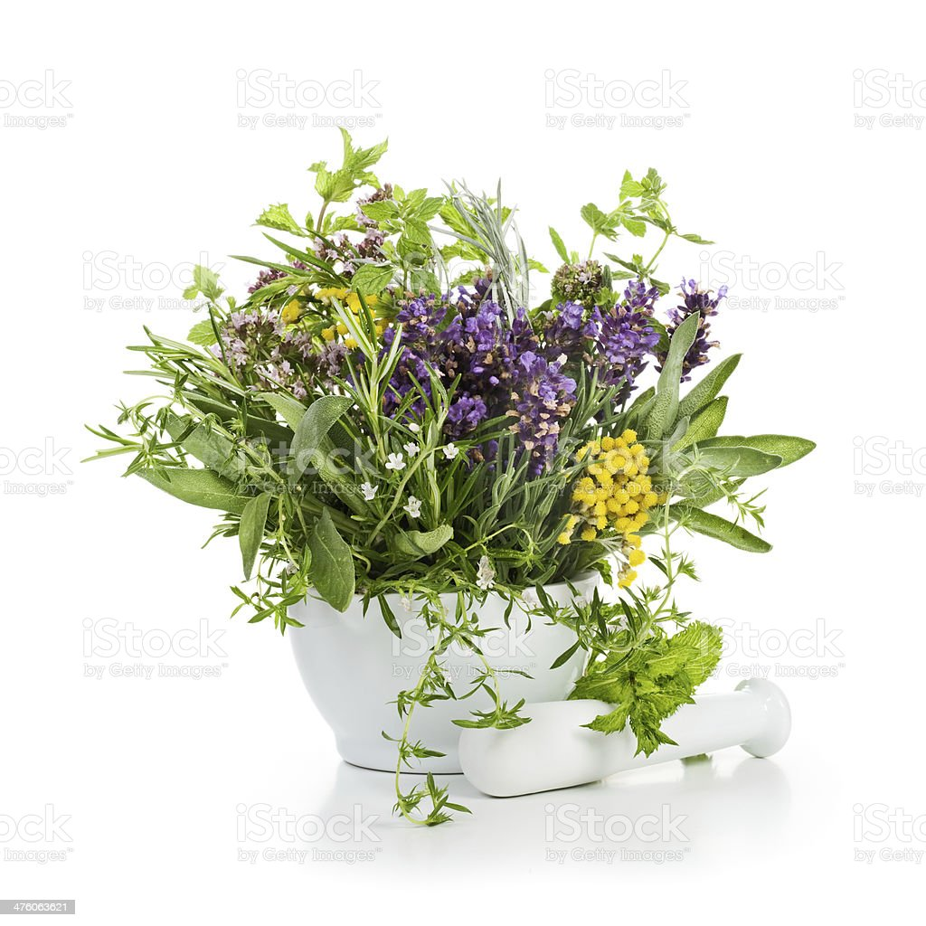 Herbs in Bloom royalty-free stock photo