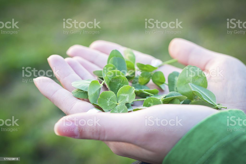 Herbs in palm of hand stock photo