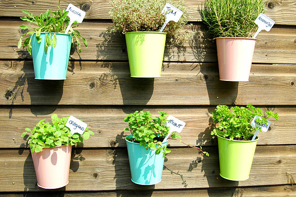 herbs in pot herbs in the garden in colorfull jars thyme photos stock pictures, royalty-free photos & images