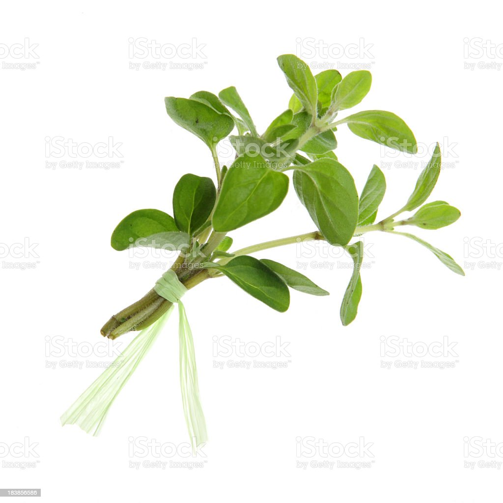 Herbs, Isolated - Oregano royalty-free stock photo