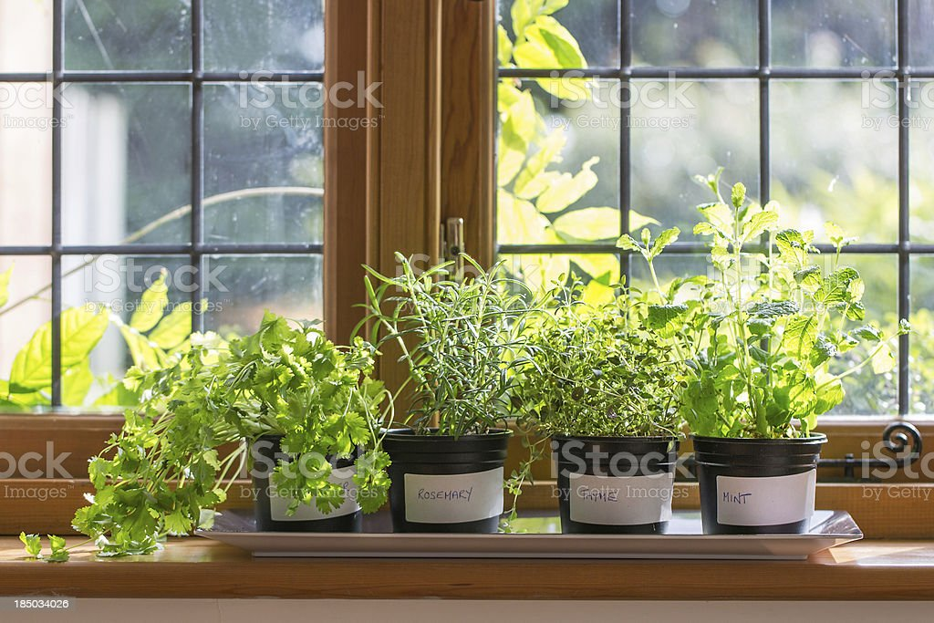 Herbs on a windowsill stock photo