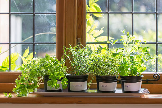 herbs on a windowsill - 草本植物 個照片及圖片檔