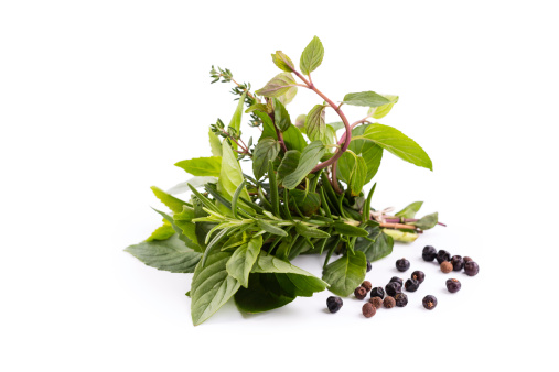 juniper with rosemary, basil, mint, thyme, stevia tied in a bunch; isolated on white