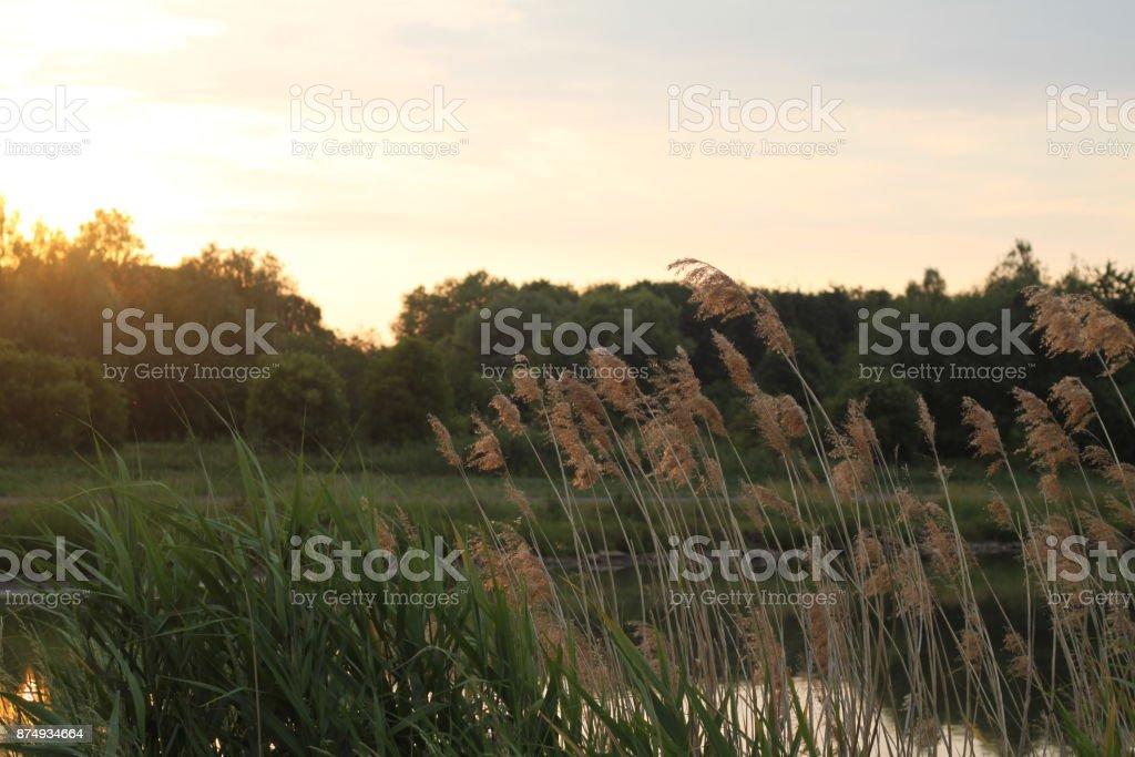 Herbes aromatiques  - Photo