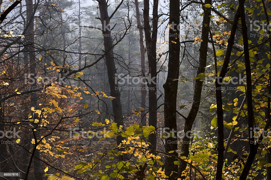 Herbst im Wald royalty free stockfoto