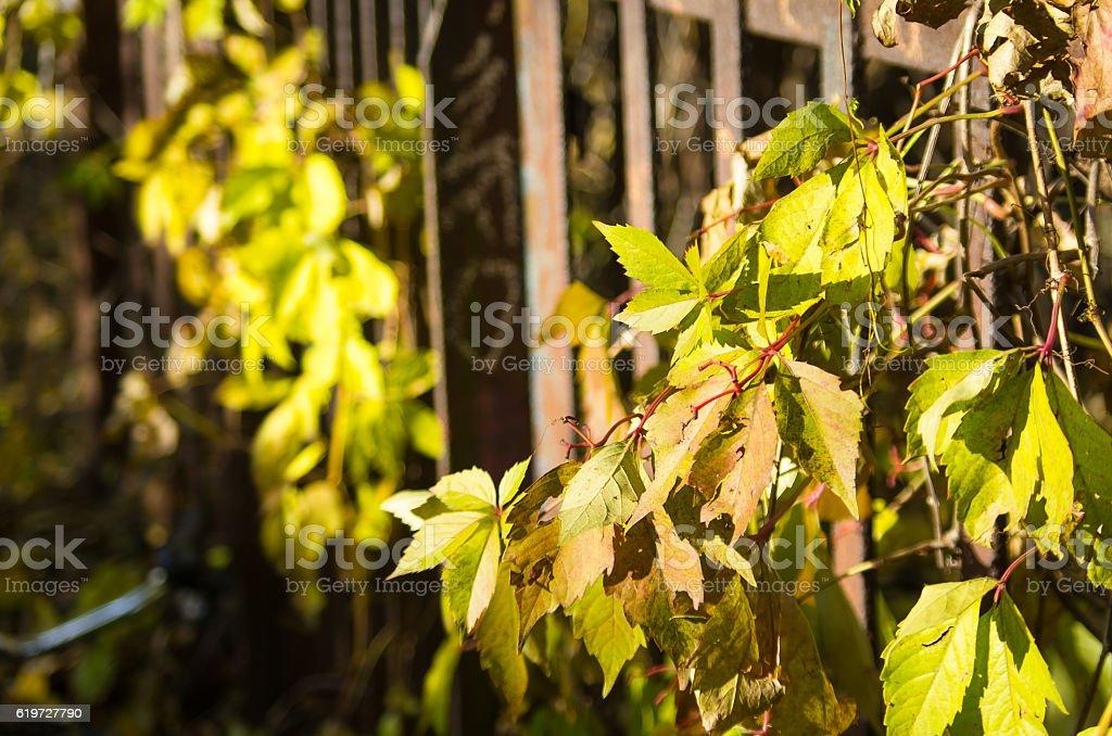 Herbst in Berlin stock photo