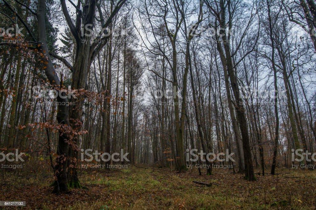 Herbst in Northeim stock photo