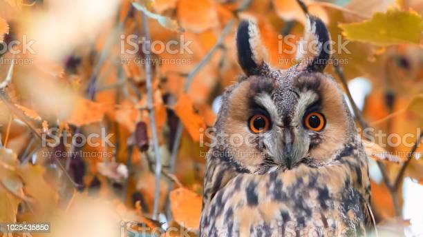 Herbst mit waldohreule picture id1025435850?b=1&k=6&m=1025435850&s=612x612&h=ehhi2wjob9aa1d7abcvlmcjj2lffeav8j0trylqhzt0=