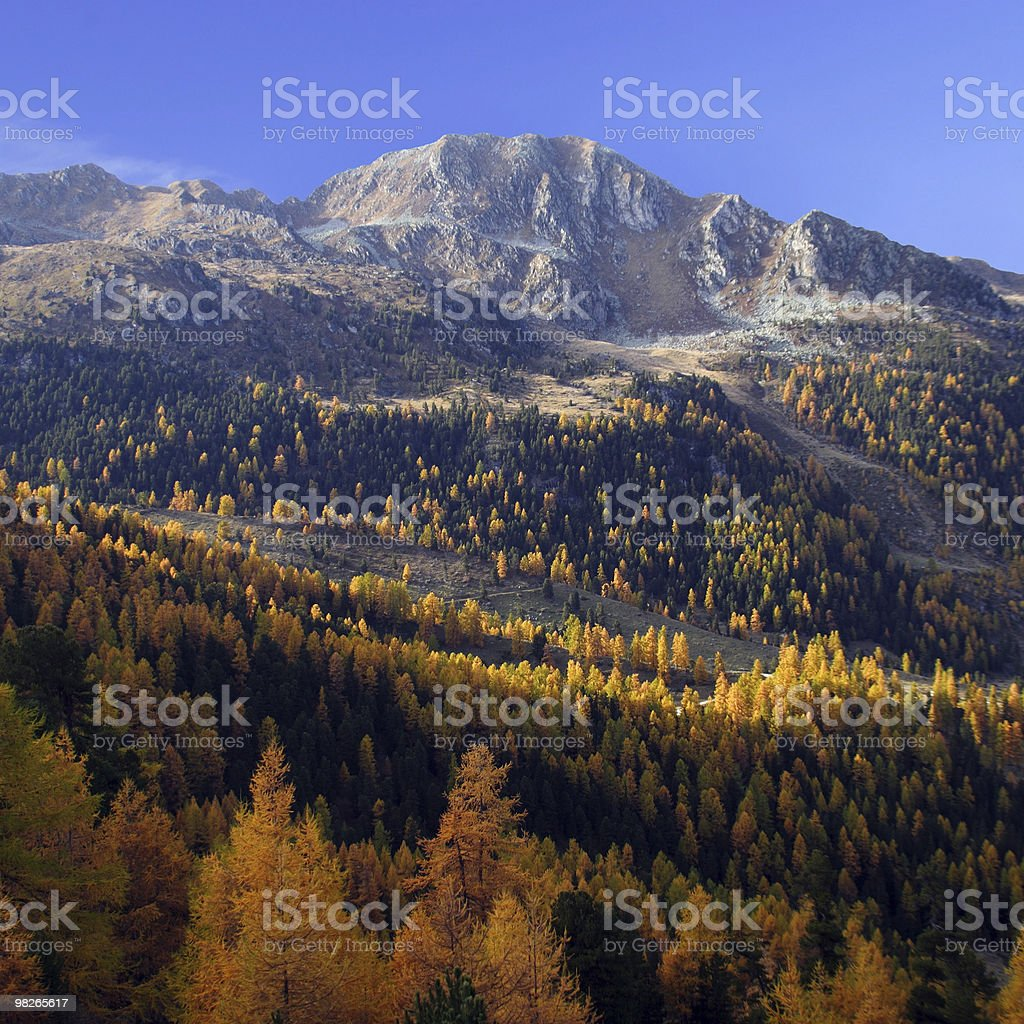 Herbst royalty-free stock photo