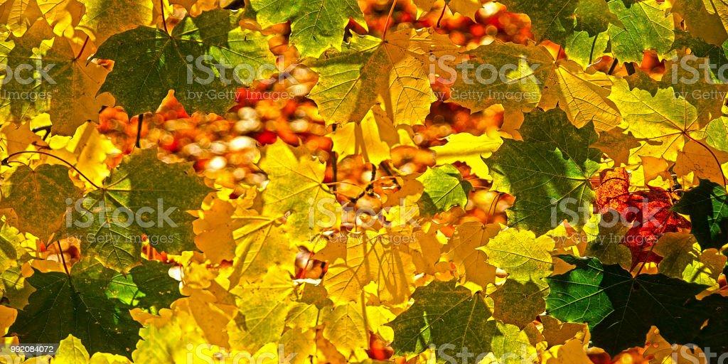 Autumn collection – Foto