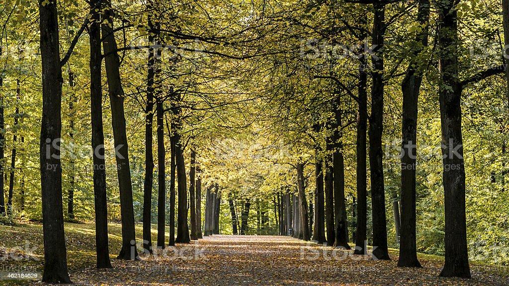 Herbstallee stock photo