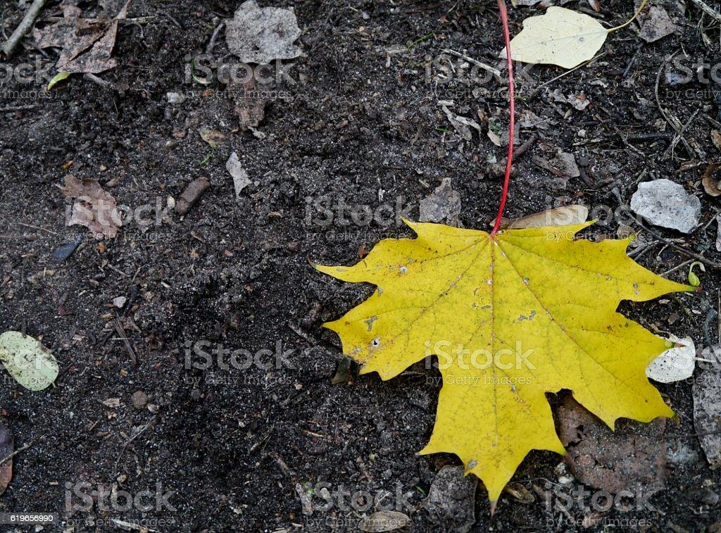 Herbstblatt auf dem Boden – Foto