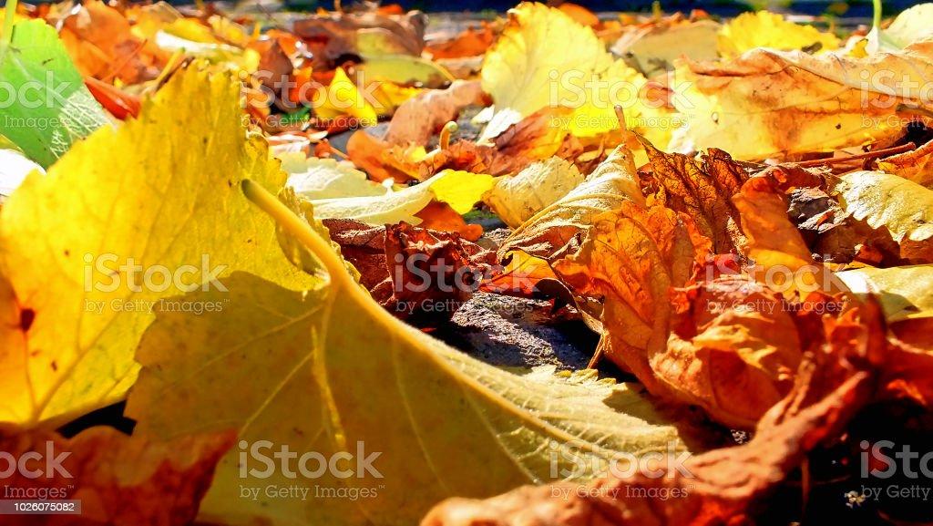 Herbstlaub - Lizenzfrei Baum Stock-Foto