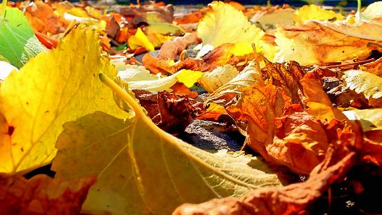 Herbstlaub Stockfoto und mehr Bilder von Baum