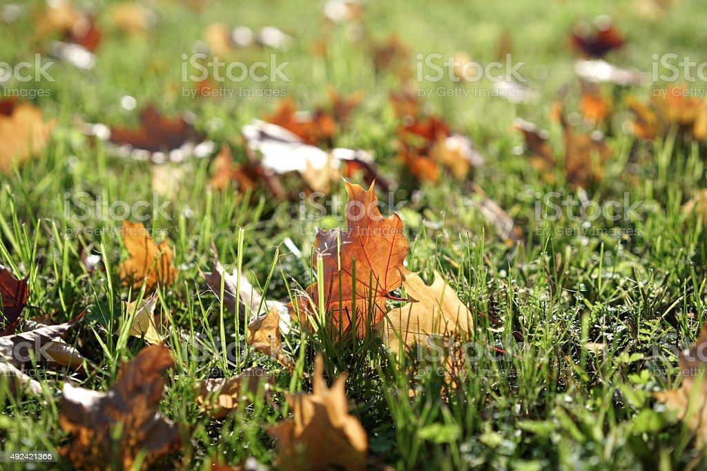 Herbstlaub stock photo