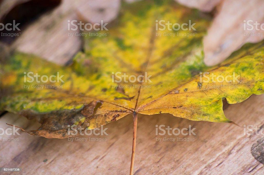 Herbstliches Laubblatt Lizenzfreies stock-foto