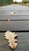 Eichenblatt auf dem Holzsteg