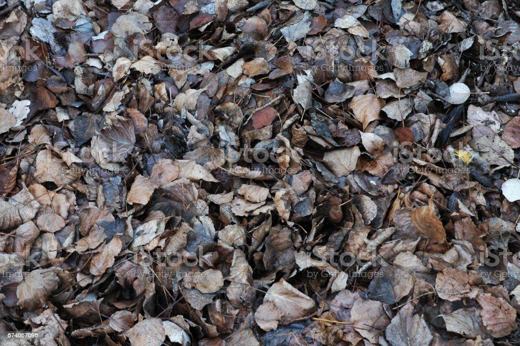 Herbstwald / Herbstfarben in Spanien royalty-free stock photo