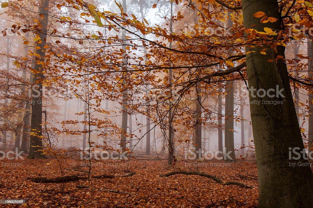 Herbstwald im Nebel stock photo