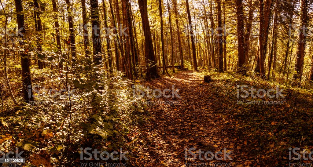 Herbstwald royalty-free stock photo