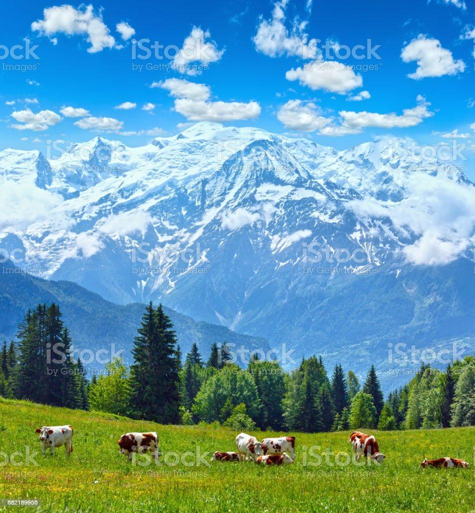Herde Kühe auf Waldwiese und Mont-Blanc-Berg – Foto