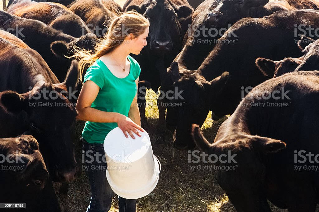 Herd of Black Angus Cattle Surrounding Female Rancher stock photo