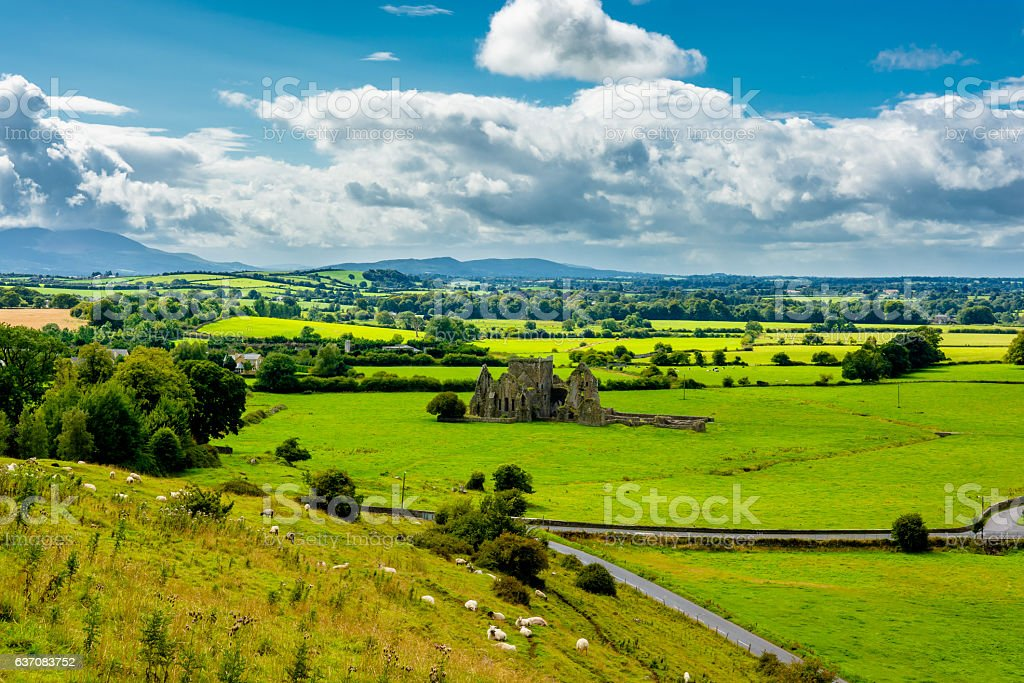 Herd Of Cattle In Landscape Of Tipperary In Ireland stock photo