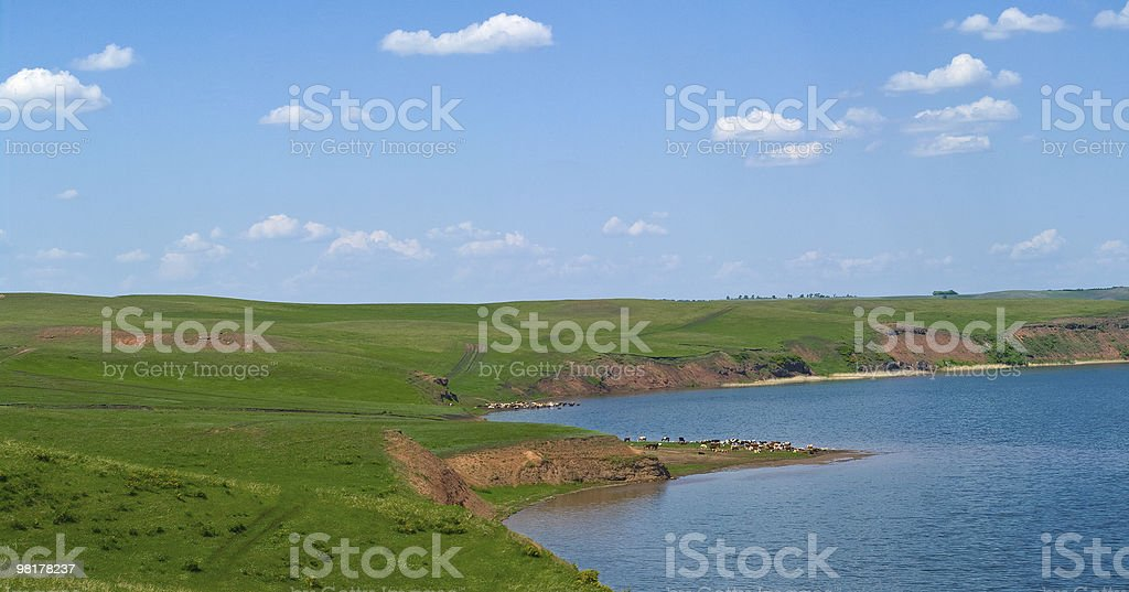 herd of cows is grazed on hills royalty-free stock photo