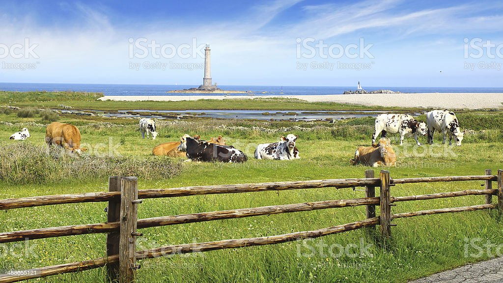 Herd of cows on pasture. stock photo