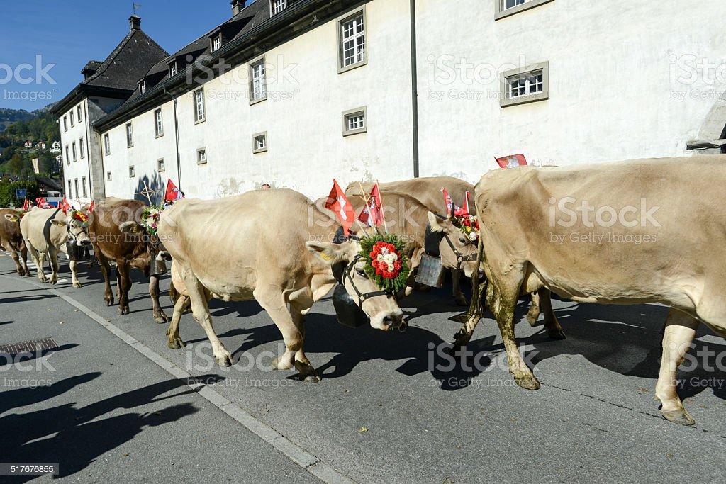 Herde von Kühen auf der jährlichen transhumance im Engelberg – Foto