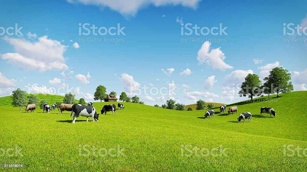 Herd of cows on the green meadows stock photo