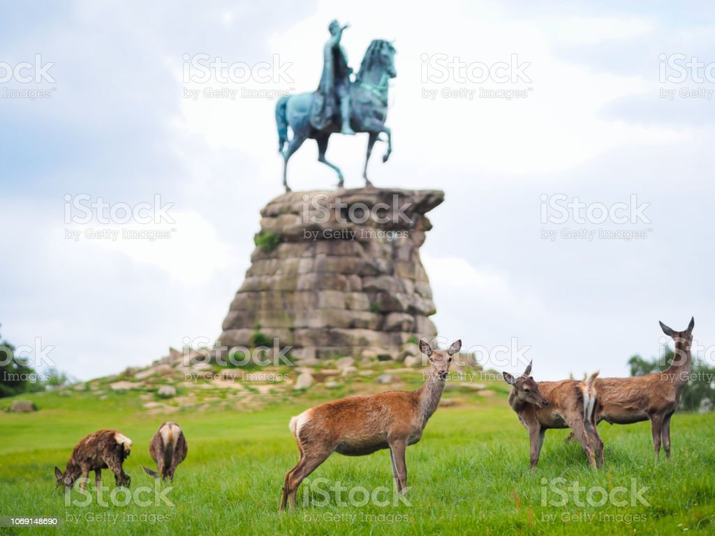 Un troupeau de cerfs à Windsor Great Park, en face de la statue du roi George III - Photo