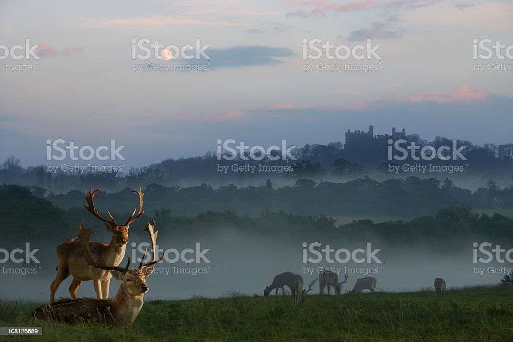 Herd of Deers Eating and Lying in Grass at Sundown royalty-free stock photo