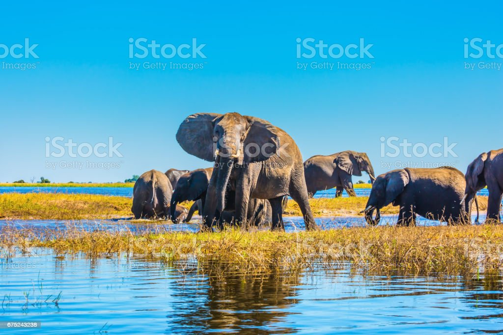 Herd of elephants adults and cubs​​​ foto
