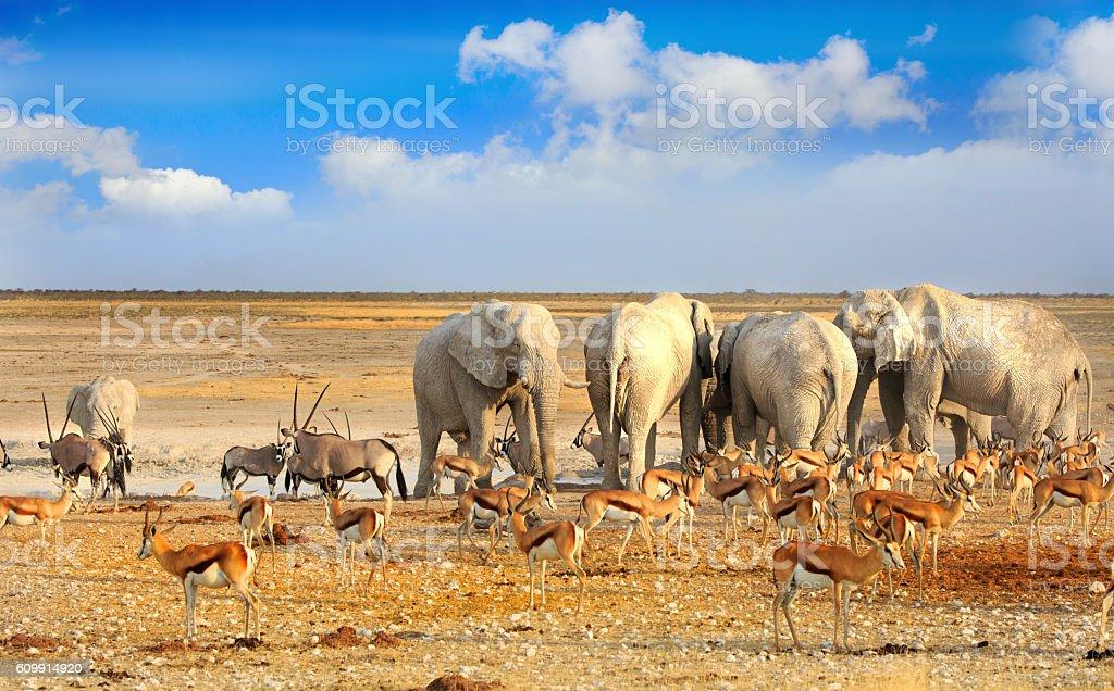 Herd of elephants around a waterhole in Etosha stock photo