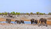 Landscape of elephants drinking from a waterhole in Etosha national park - namibia