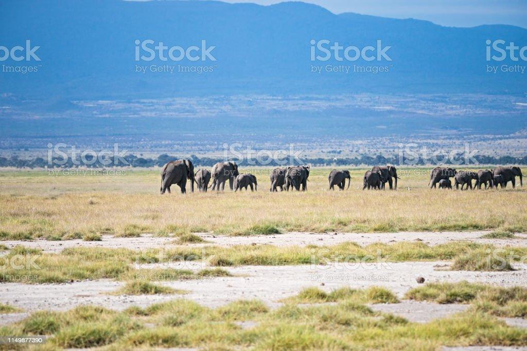 Herd of elephants goes away stock photo