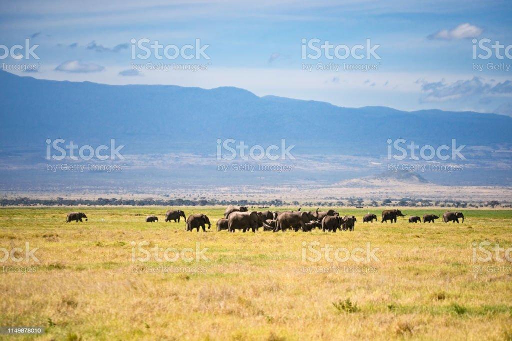 Herd of elephants in Kilimanjaro foothills stock photo