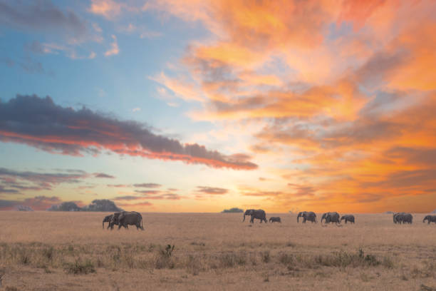 A herd of elephants in Tarangire national park,Tanzania. This photo was taken in Tarangire National Park while I was doing game driving safari . ngorongoro conservation area stock pictures, royalty-free photos & images