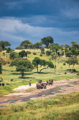 Herd of elephants crossing the riverbed in Tarangire National Park, Tanzania.