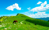 Herd of horse grazing at hill with beautiful blue sky and white clouds. Horse farming ranch. Animal pasture.  Landscape of green grass field on the mountain. Countryside grassland in spring.