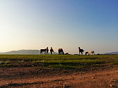Herd of horses grazing on summer green grass meadow. Chestnut, Bay, white, Dapple gray colors of fur and mane of stallions and mares against mountains and clear sunset dawn sky