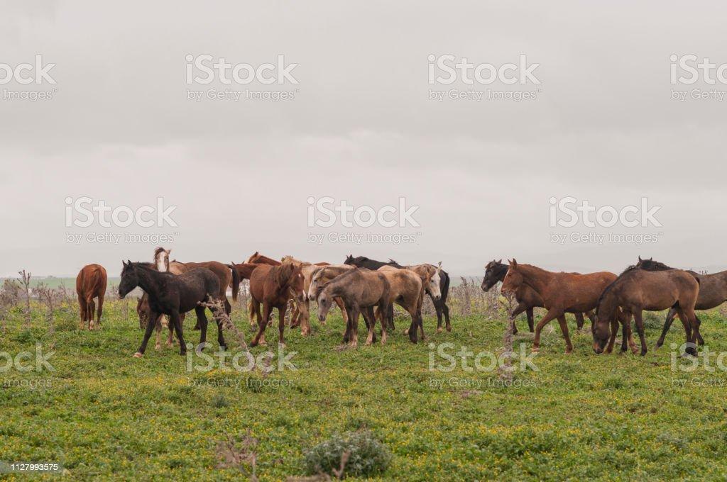 Herd of horses in freedom stock photo