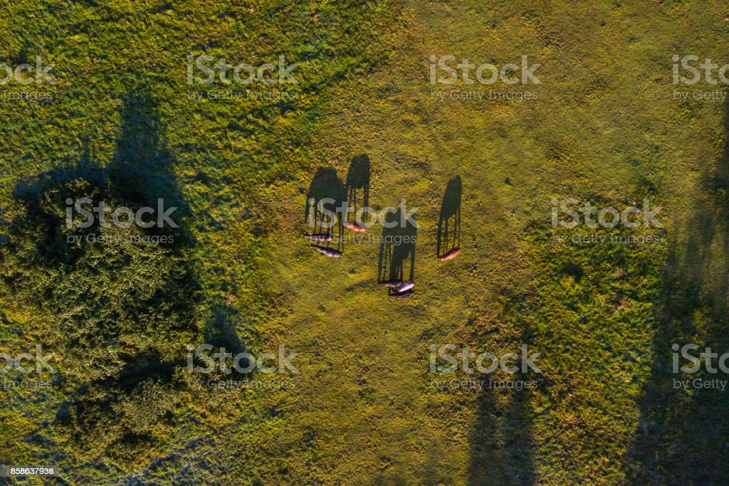 Herd of horses on a meadow, view from above stock photo