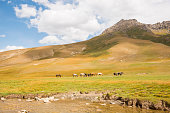Herd of horses on pasture on green meadow against green hill and blue sky. In front small river.