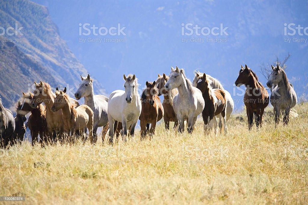 herd of horses stock photo