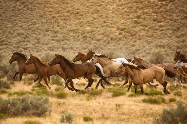 A Herd of Horses Running stock photo