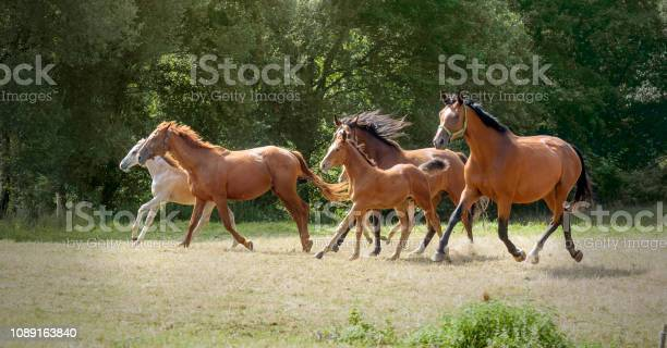 Herd of mares and foals galloping picture id1089163840?b=1&k=6&m=1089163840&s=612x612&h=9g0ujfttjk mek9qvsiih9bava8ft vwvdxkagszn8c=
